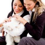 descargar gratis dedicatorias de amistad, enviar nuevas frases de amistad