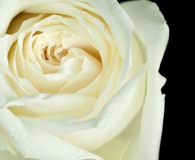 ejemplo de carta para saludar por bodas de plata,saludos por bodas de plata,carta para saludar por bodas de plata