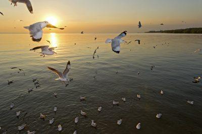 mensajes con imàgenes de buenos dias para conquistar , pensamientos de buenos dias para conquistar , saludos de buenos dias para conquistar