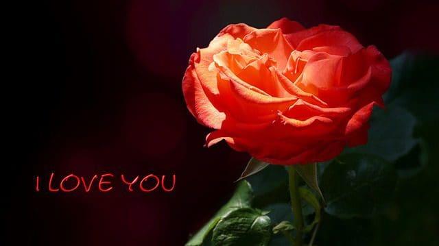 bajar bonitas dedicatorias de amor para tu enamorada