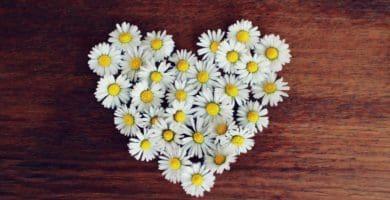 bonitos textos de San Valentín para compartir