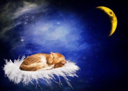 Saludos Bonitos De Buenas Noches Mensajes Para Desear